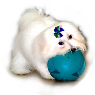Training Your Coton